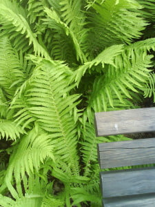 benken i haven