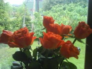 roser som har ligget på is
